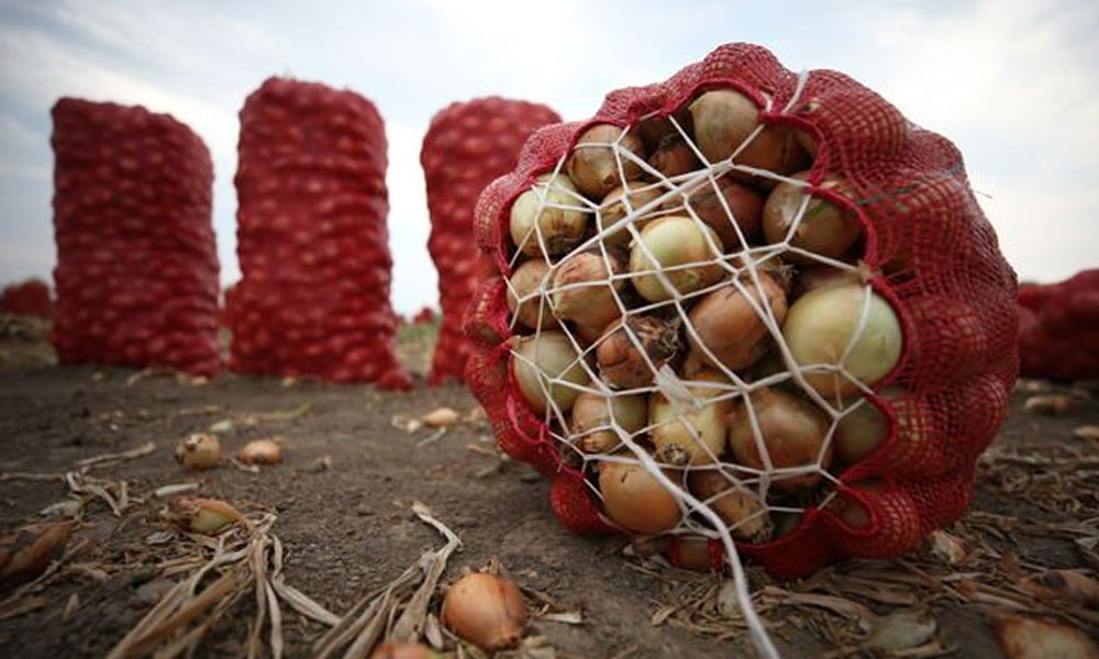 Soğan fiyatları yılbaşına kadar 10 lirayı bulabilir!
