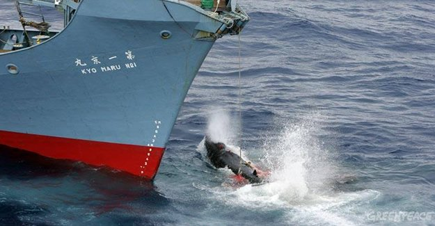 Japonya'da 30 yıllık av yasağı kalkıyor