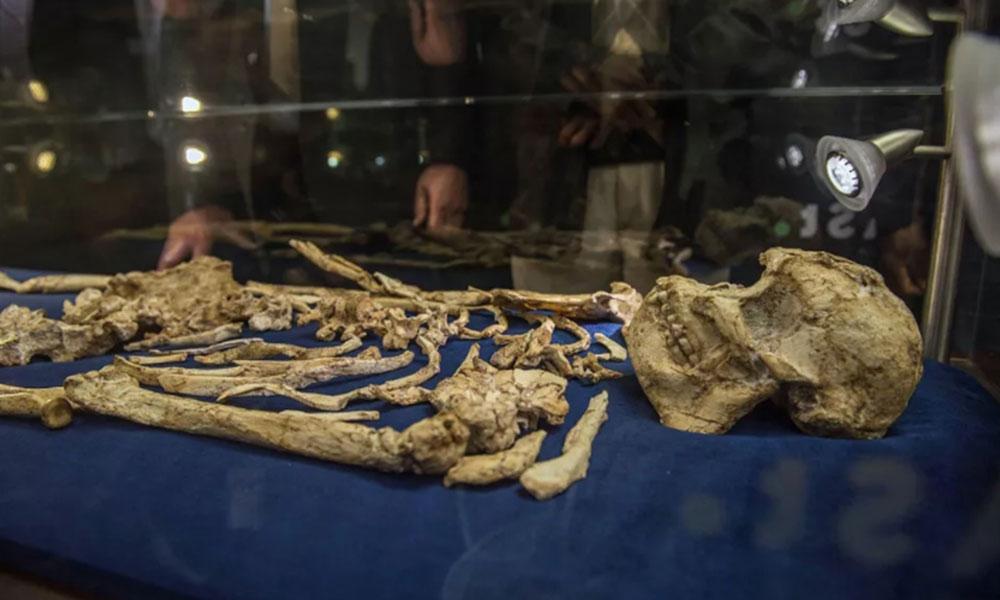 Yeni bir Erken Dönem İnsan Türü keşfedildi: 3 milyon yıldan daha yaşlı