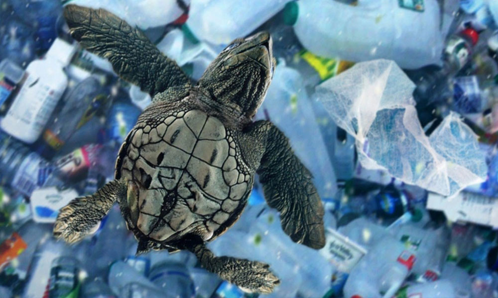 Dünyanın en derin çukurunda bile plastik atıklar bulundu