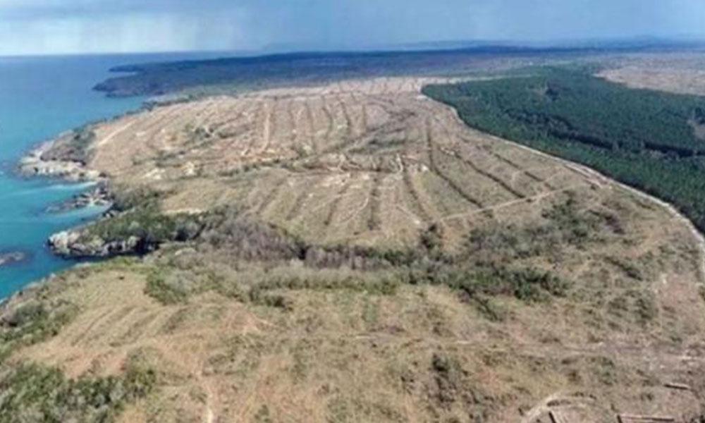 Japonya, 650 bin ağaç kesilen Sinop nükleer santralinden vazgeçiyor