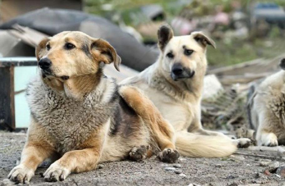 Yeni Şafak'tan sokak köpeklerine: Dehşet saçan canavarlar
