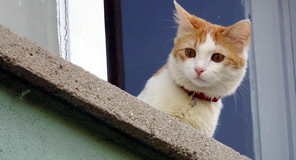 Kedili optik yanılsama: Kafanı salla