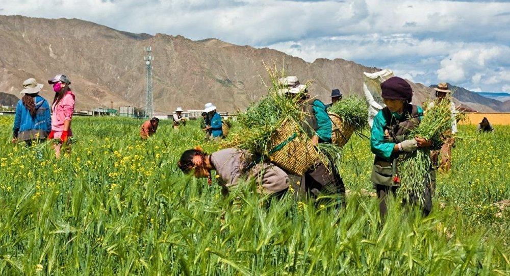 Çiftçiler zam ve kredi borçları altında ezildi, küçükbaş hayvan sayısı azaldı