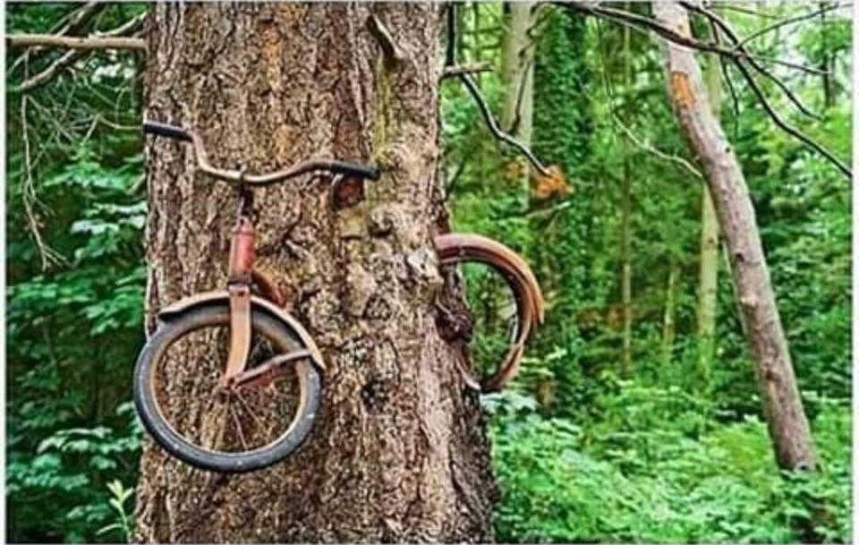 İşte ağacın içindeki bisikletin hikayesi!