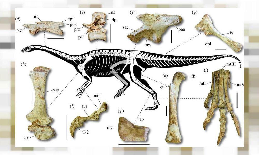 Brezilya'da yeni bir dinozor türüne ait iskeletler bulundu
