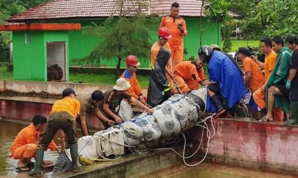Endonezya'da timsah saldırısı: İnci çiftliğinde havuza düşen kadını öldürdü
