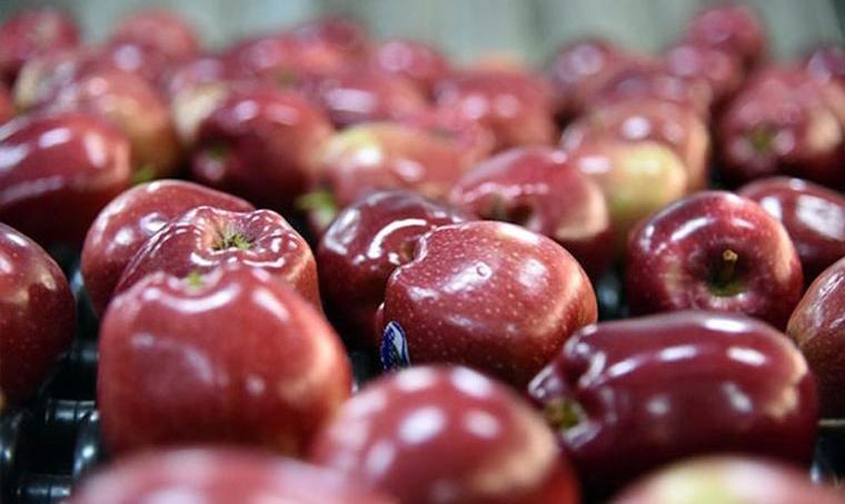 Türkiye'den giden 19 ton elma, Rusya'dan aynen iade!