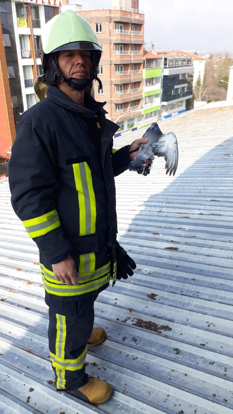 Yaralı güvercini kurtaran itfaiye, yarasını da sardı