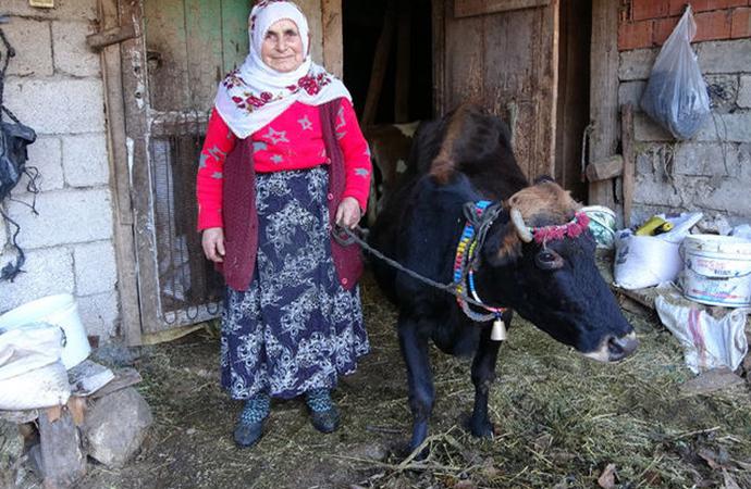 Trabzonlu çiftin 'evladımız' dediği inekle ilişkisi duygulandırdı…
