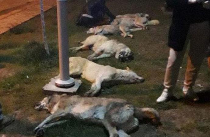 Ankara'da zehirlenen köpeklerden 7'si hayata tutundu