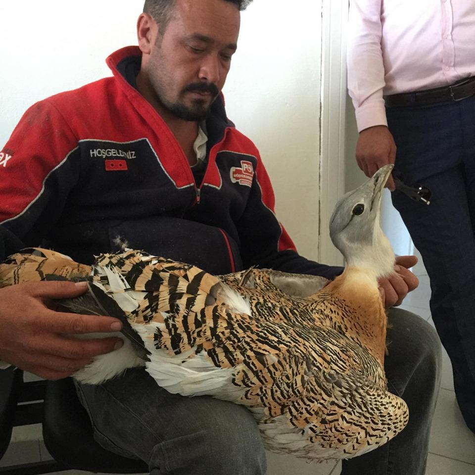 Nesli tehlike altında olan toy kuşu yaralı bulundu