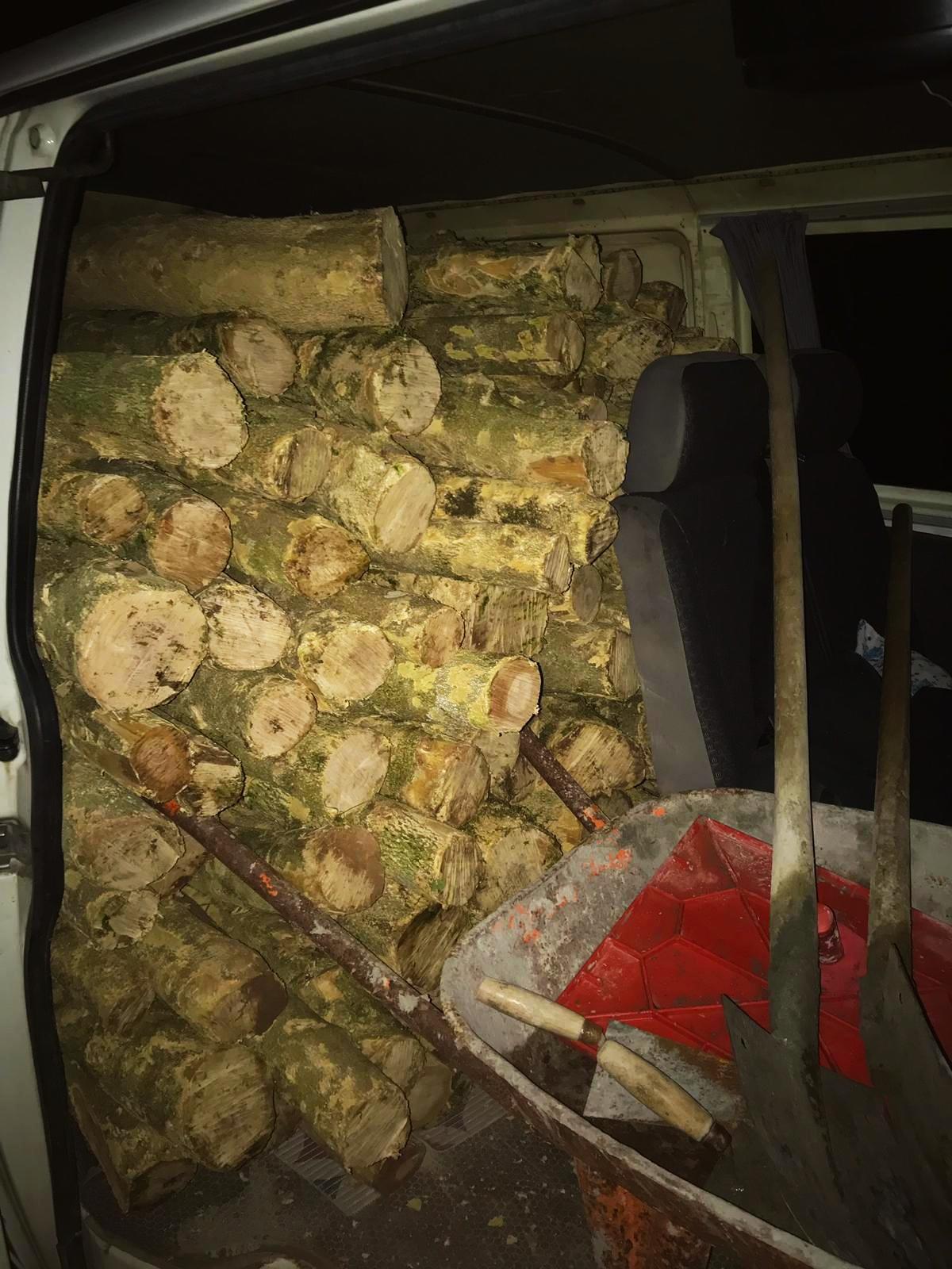 Yeşil düşmanları suçüstü yakalandı: Koruma altındaki ağaçları kesen üç kişi gözaltında!