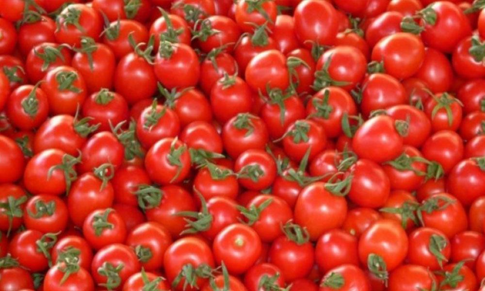 Rusya, tonlarca domatesi Türkiye'ye iade etti