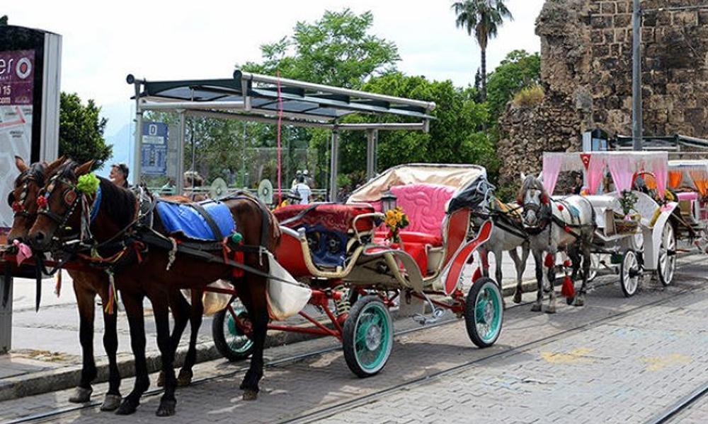 CHP'li başkandan örnek karar… Antalya'da atlar emekli oluyor!