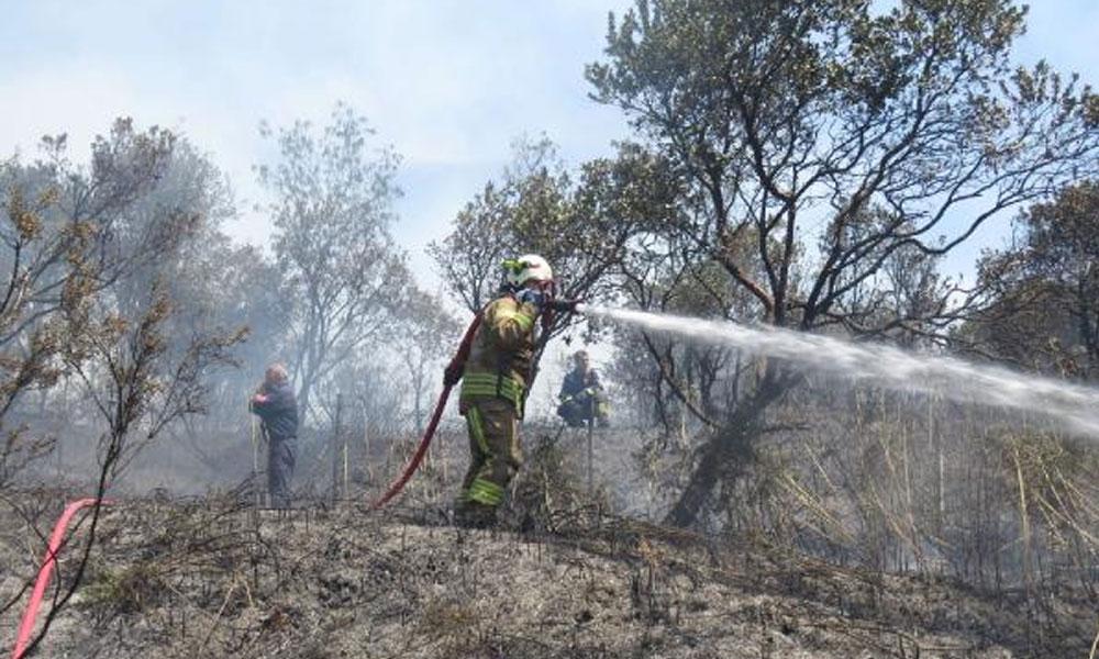 Kavacık'ta ormanlık alanda yangın