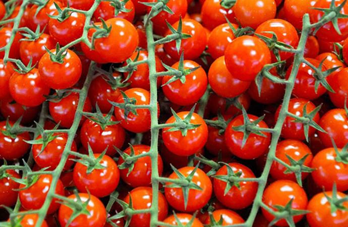 Tonlarca domates, Ukrayna'dan geri döndü