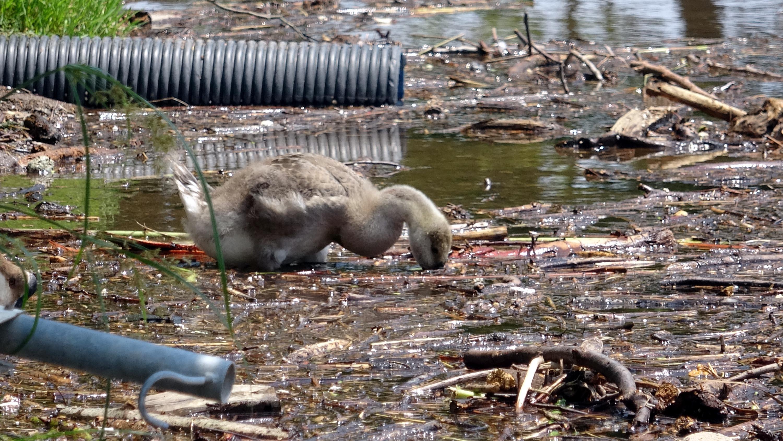 Selin sürüklediği ağaç parçaları ve çöp, Sapanca Gölü'nü kapladı