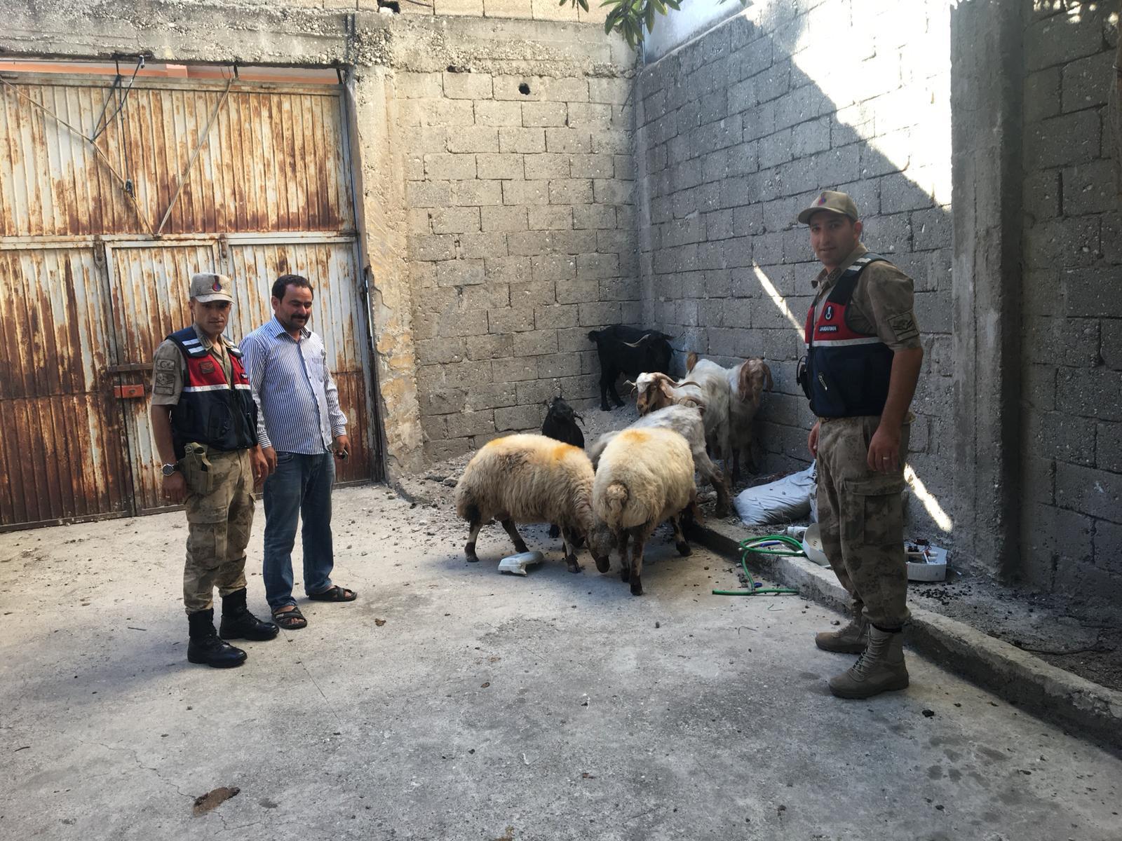 Çaldıkları koyunları satan hırsızlar 3 kişi yakalandı