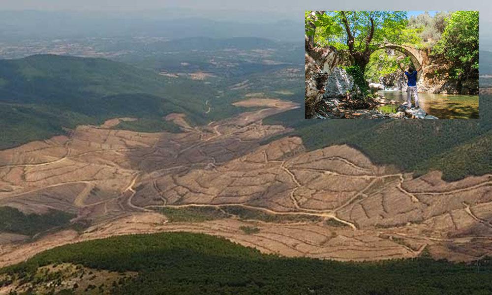 Kazdağları'nda izin verilenin dört katından fazla ağaç kesilmiş