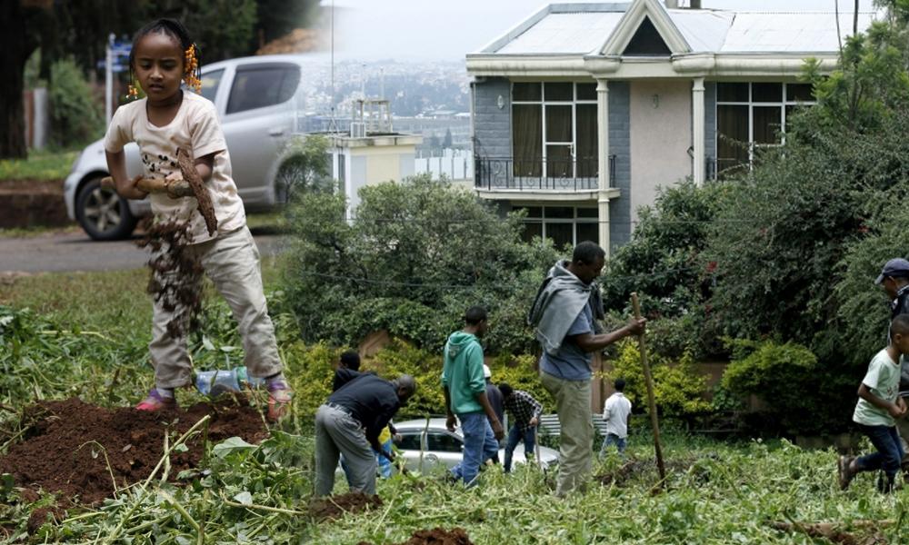 Etiyopya'da 353 milyon fidan ile dünya rekor kırıldı