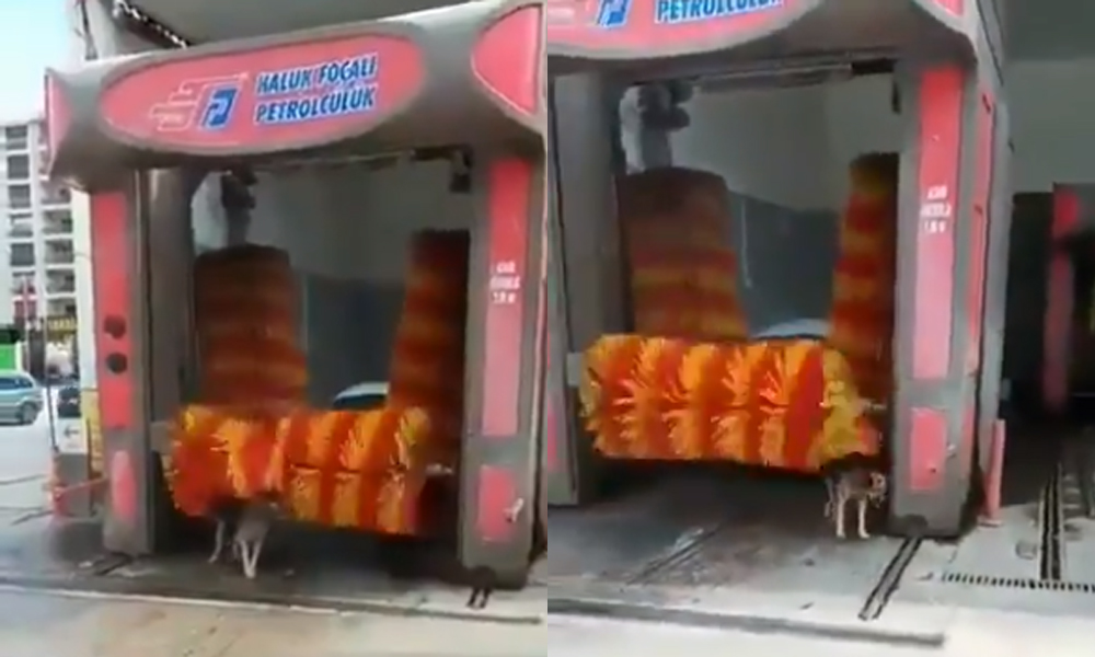Sıcaktan bunalan köpek böyle serinledi
