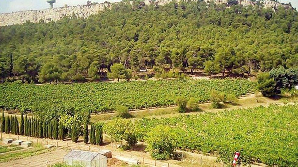 Ankara Garı'nın Medipol'e verilmesinden sonra şimdi de Atatürk Orman Çiftliği'nden 555 bin metrekare arazi…