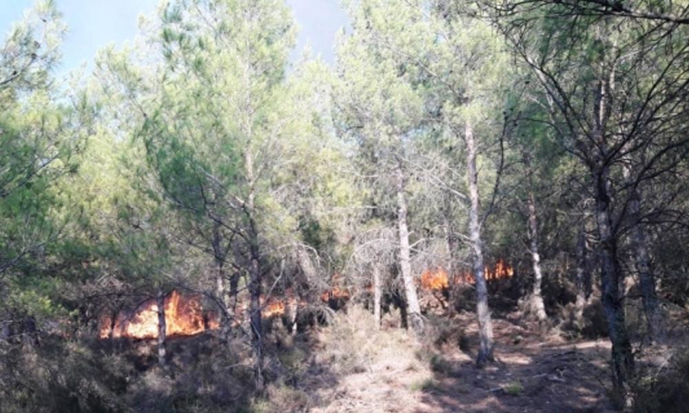 Muğla Milas'da orman yangını!