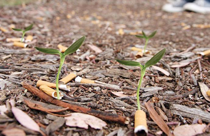 Her yıl yere atılan 4.5 trilyon sigara izmariti bitkileri kökünü kurutuyor ve strese sokuyor!