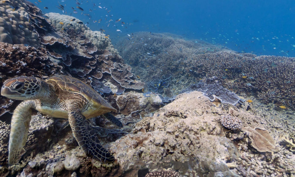 Google Haritalar uygulaması kullanıcıları deniz altına götürüyor