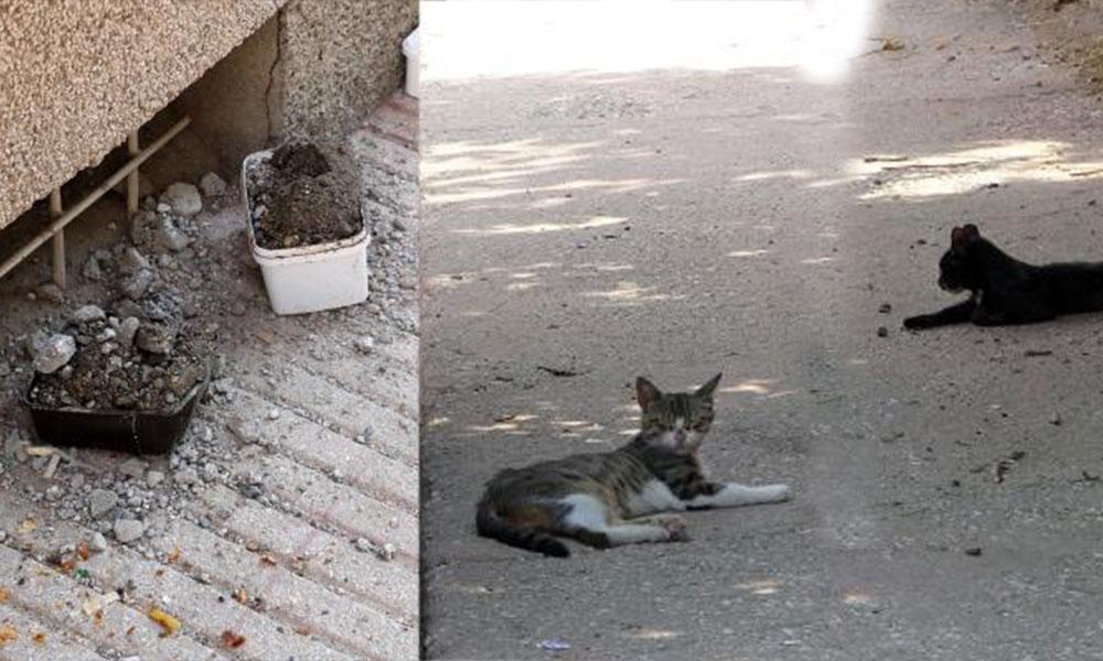 Vicdansızlar! Sokak hayvanlarının yemek kaplarını molozla doldurdular