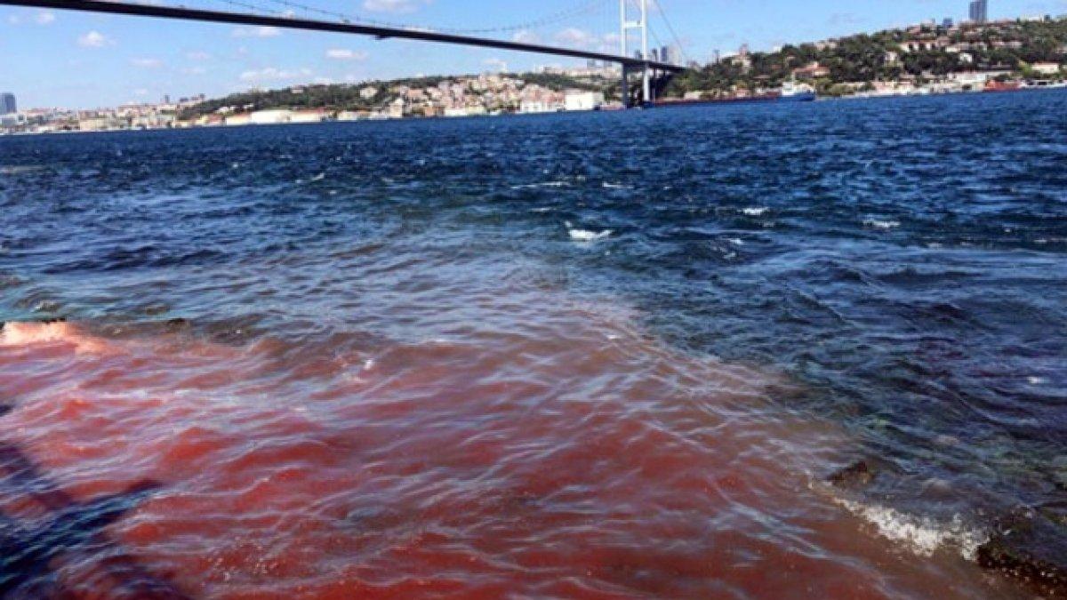 Tüm uyarılara rağmen deniz yine kana bulandı
