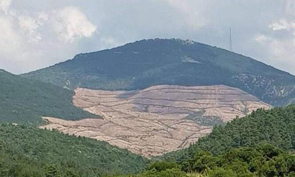 195 bin ağacın kesildiği Kaz Dağları'na bir altın madeni daha…