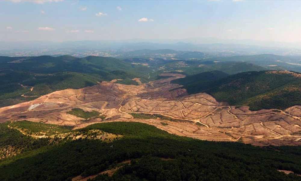Kaz Dağları'nda ağaç katliamı yapan şirketin CEO'su özür diledi