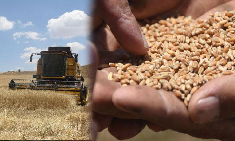İklim değişiklikleri, hasat dönemlerini etkilemeye başladı