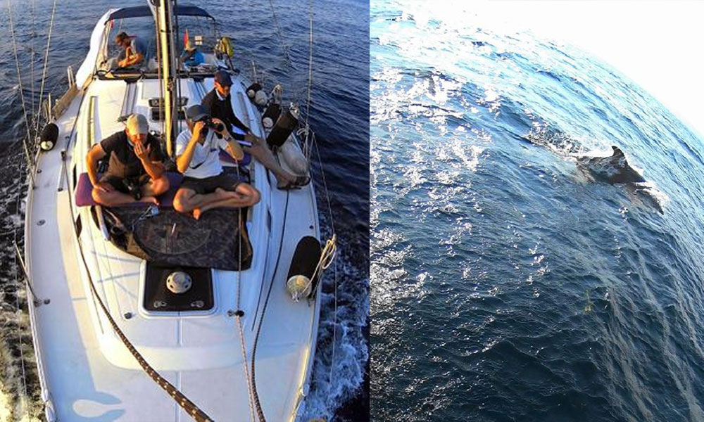 Marmara Denizi'nde 'yunus sayımı' yapıldı… Yunustan çok çöp çıktı!
