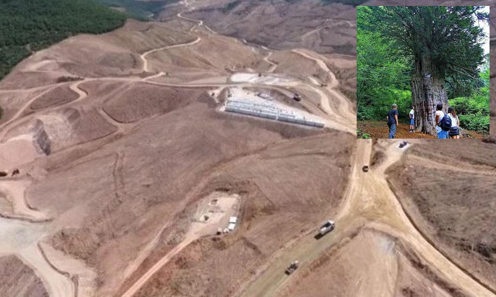 Kesilen ağaç sayısı 10 bin dolayında! Orman katliamı Kaz Dağları'ndan sonra Zonguldak'a sıçradı