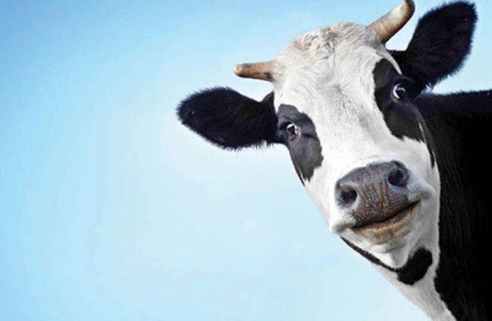 Süte ekstra zam geliyor! Hükümet kararlı