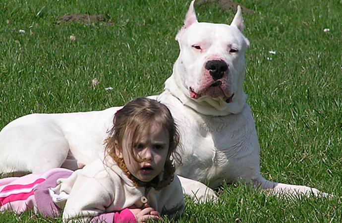 Valilikten tartışma yaratacak karar: O köpekleri besleyenlere 7 bin 802 lira ceza!