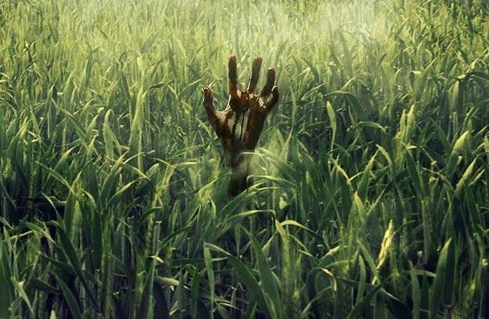 In the Tall Grass için tanıtım videosu yayınlandı