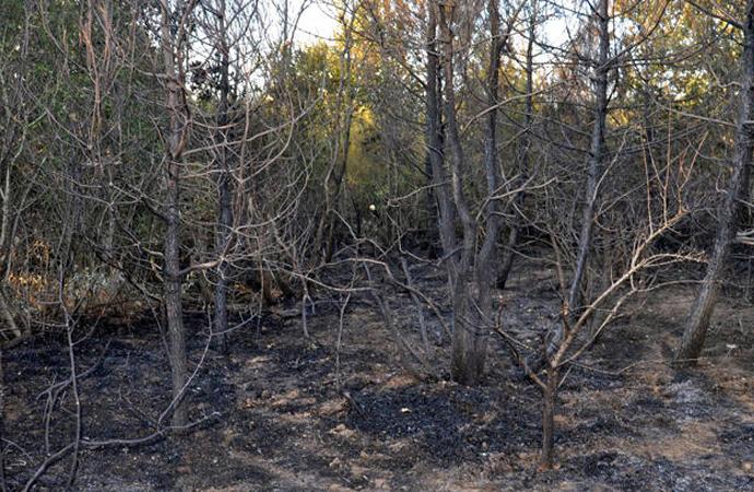 Tekirdağ'da orman yangını!