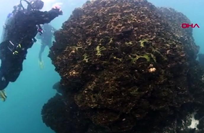 Van Gölü'nde bilim insanlarını heyecanladıran keşif: 23 metre boyunda…