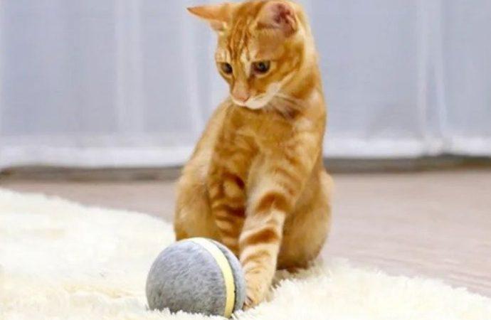 Wicked Ball: Kediler ve köpekler için yeni bir eğlence aracı