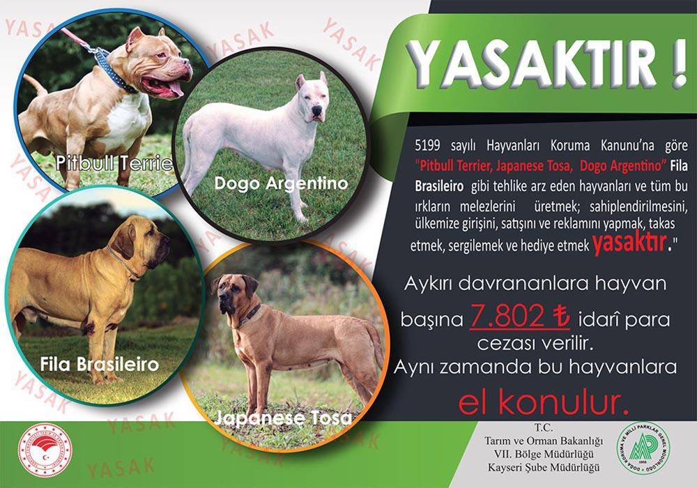 Kayseri'de 'tehlikeli köpek' uyarısı