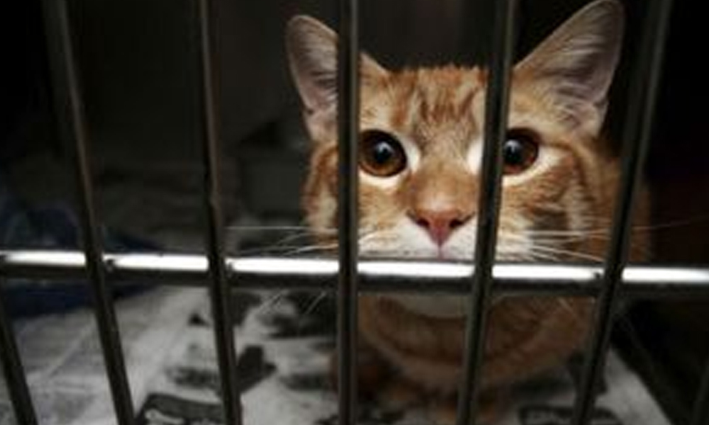 Kaçakçılık operasyonunda yakalanmıştı! 'Uyuşturucu kuryesi' kedi firar etti