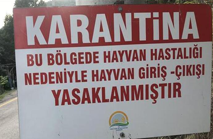 Denizli'de kuduz alarmı! 15 mahallede karantina uygulaması başlatıldı
