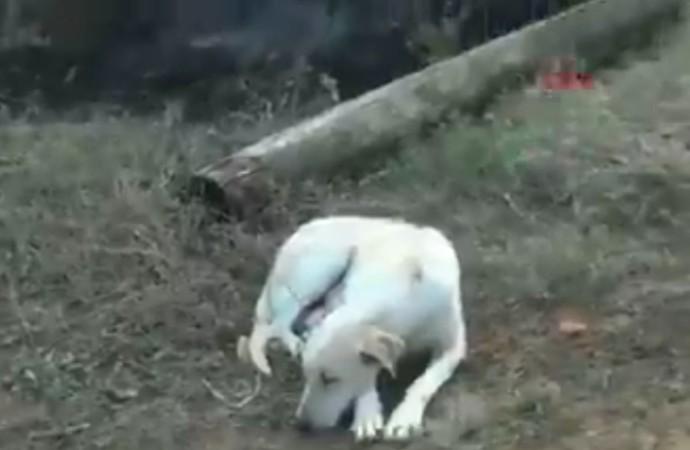 Yangında 6 yavrusunu kaybeden köpek yangın söndürülene kadar olay yerinden ayrılmadı