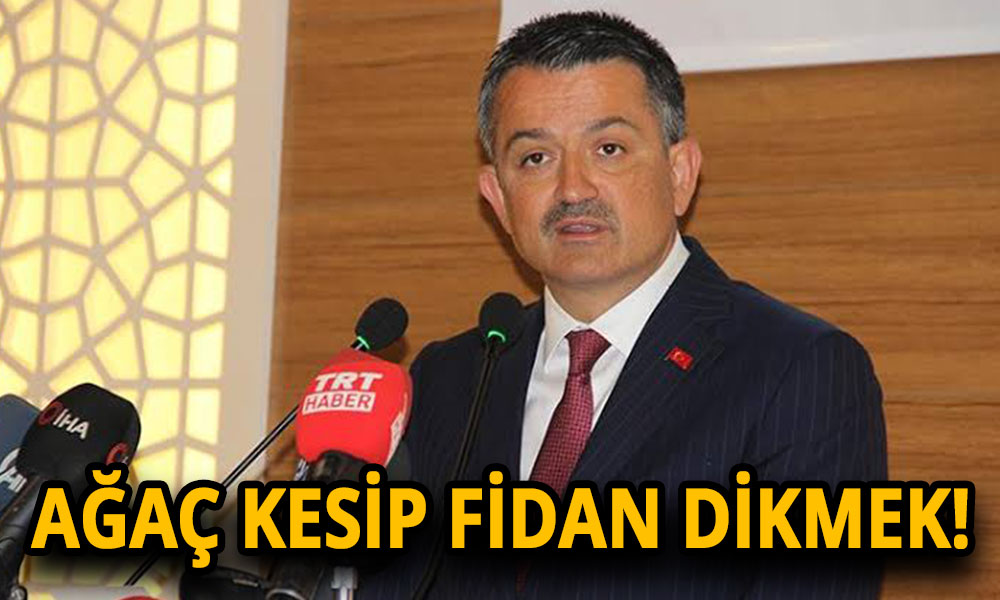 Bakan Pakdemirli, '16 yılda 4,5 milyar' fidan diktik demişti! İşte AKP döneminin ağaç katliamları