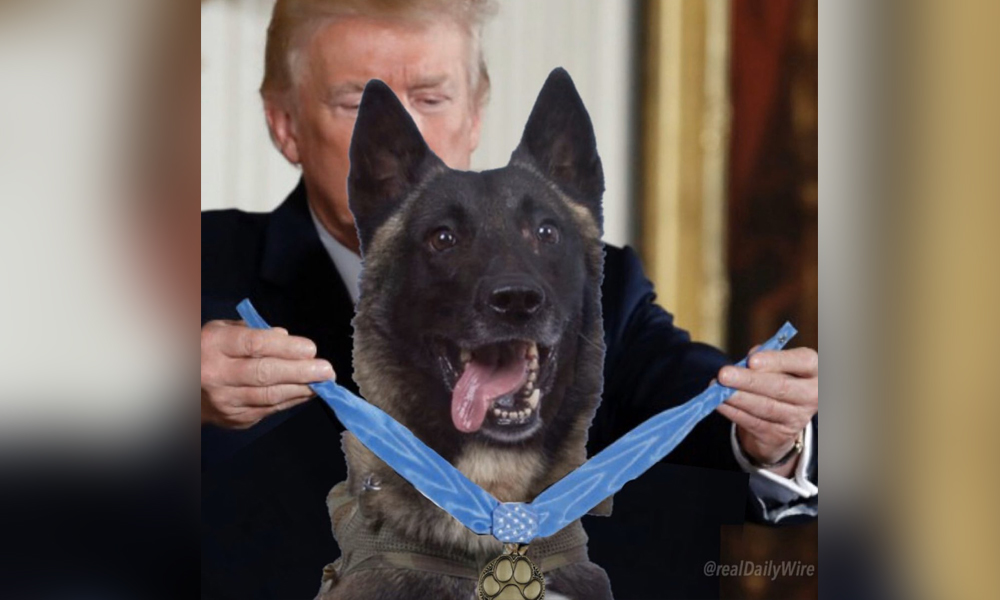 Trump'ın montajlı köpek fotoğrafının orijinali ortaya çıktı