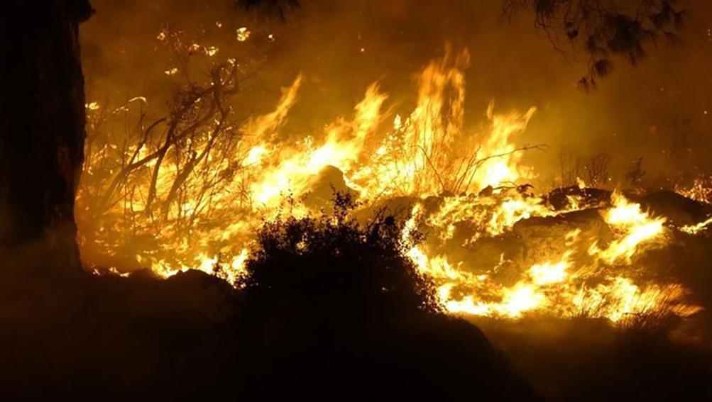 Mersin'de 3 ilçede orman yangını